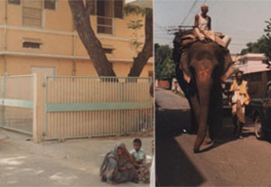 Elephant and Apt 300